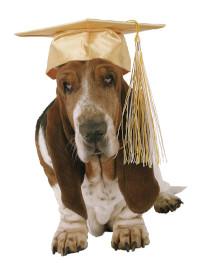 Graduation dog